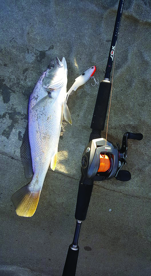 This mulloway fell victim to a Pearl White Samaki Vibelicious thrown with a Lox baitcaster setup.