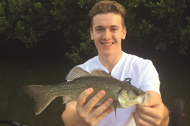 Bream and Bass on Surface