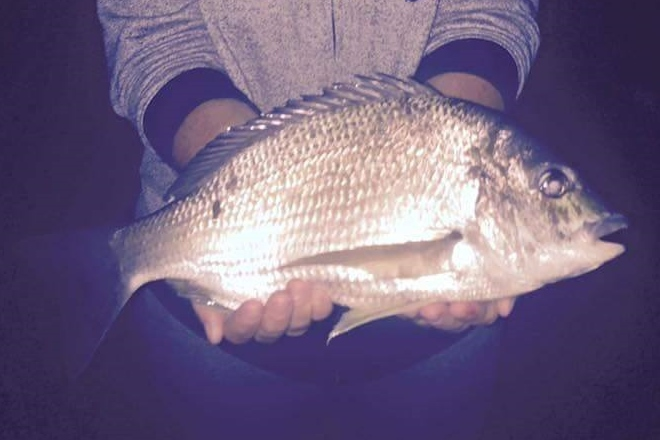 Quality Fish Caught around Bundaberg