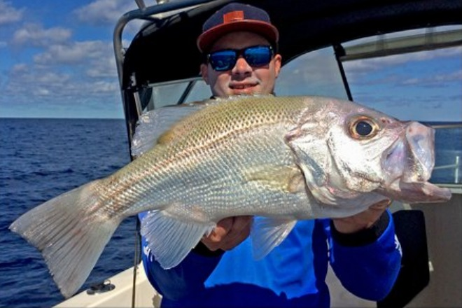 Good Numbers of Tailor in Noosa River