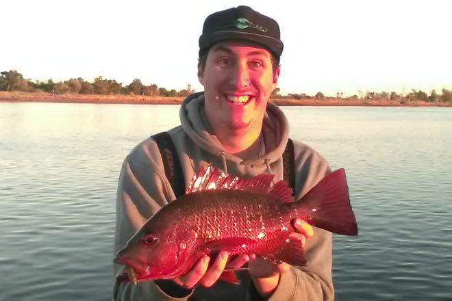 Bundaberg Fishing Report: blue salmon, mangrove jack, queenfish, flathead, mackerel, bream, bass, barra