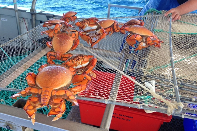 Spanner crabs off-limits in Queensland