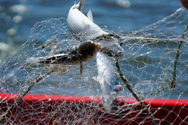 nsw commercial fishing reform