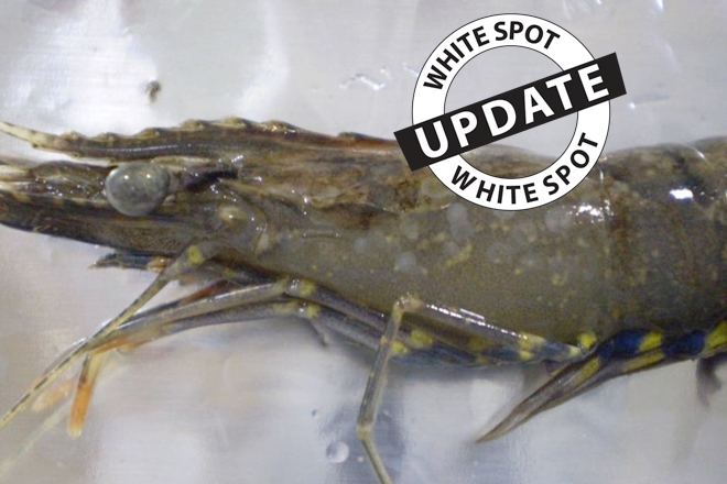 Prawn farm treatment completed following white spot outbreak