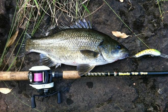 Aussie bass reminder closed season starts june 1 bush for Bass fishing season