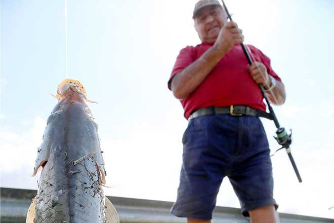 Anglers warned: using pest fish as bait is out of line