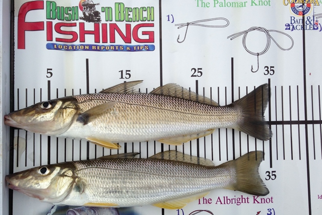 warm water species whiting