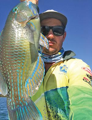 moreton bay tuskfish