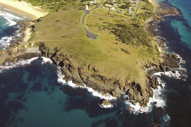 Woolgoolga Headland is home to diverse species