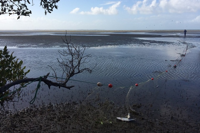 illegal net seized nudgee
