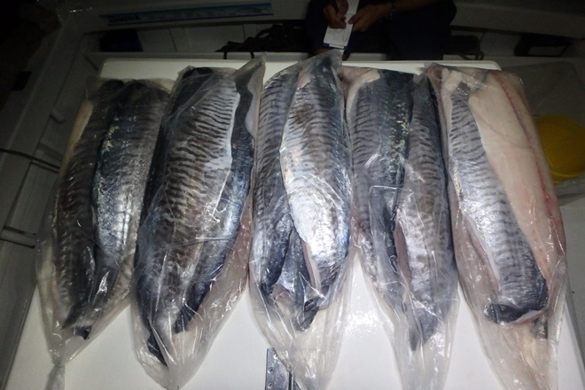Mackay fisher fined $4000 for possessing too many mackerel