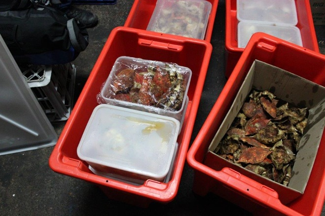 $35,690 in fines for Brisbane black market fishers