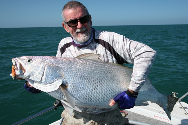 jewfish stocks queensland