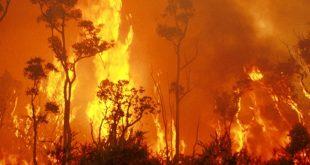 bushfire fire ban