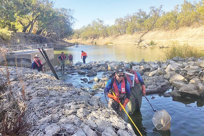 fish rescued menindee