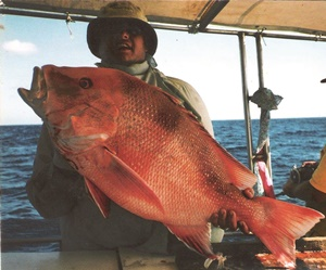 fishing experiences big dolphin fishing charters