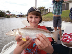 A quality whiting that came from only 30cm of dirty water.