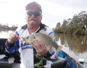 One of many bass hooked on Bassman Spinnerbaits by the author during a session in the Richmond River around Coraki.