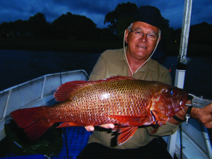 This fish took a trolled Sebile Koolie Minnow in prime time as the sun was setting.