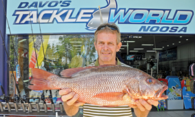 Tewantin angler Colin Keyes caught this thumper 57cm mangrove jack after dark at Woods Point.