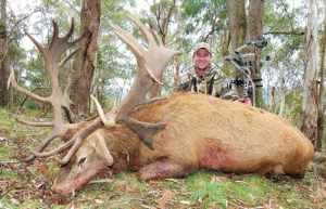 An absolute trophy of a red deer. The author worked extremely hard to take down this massive stag.