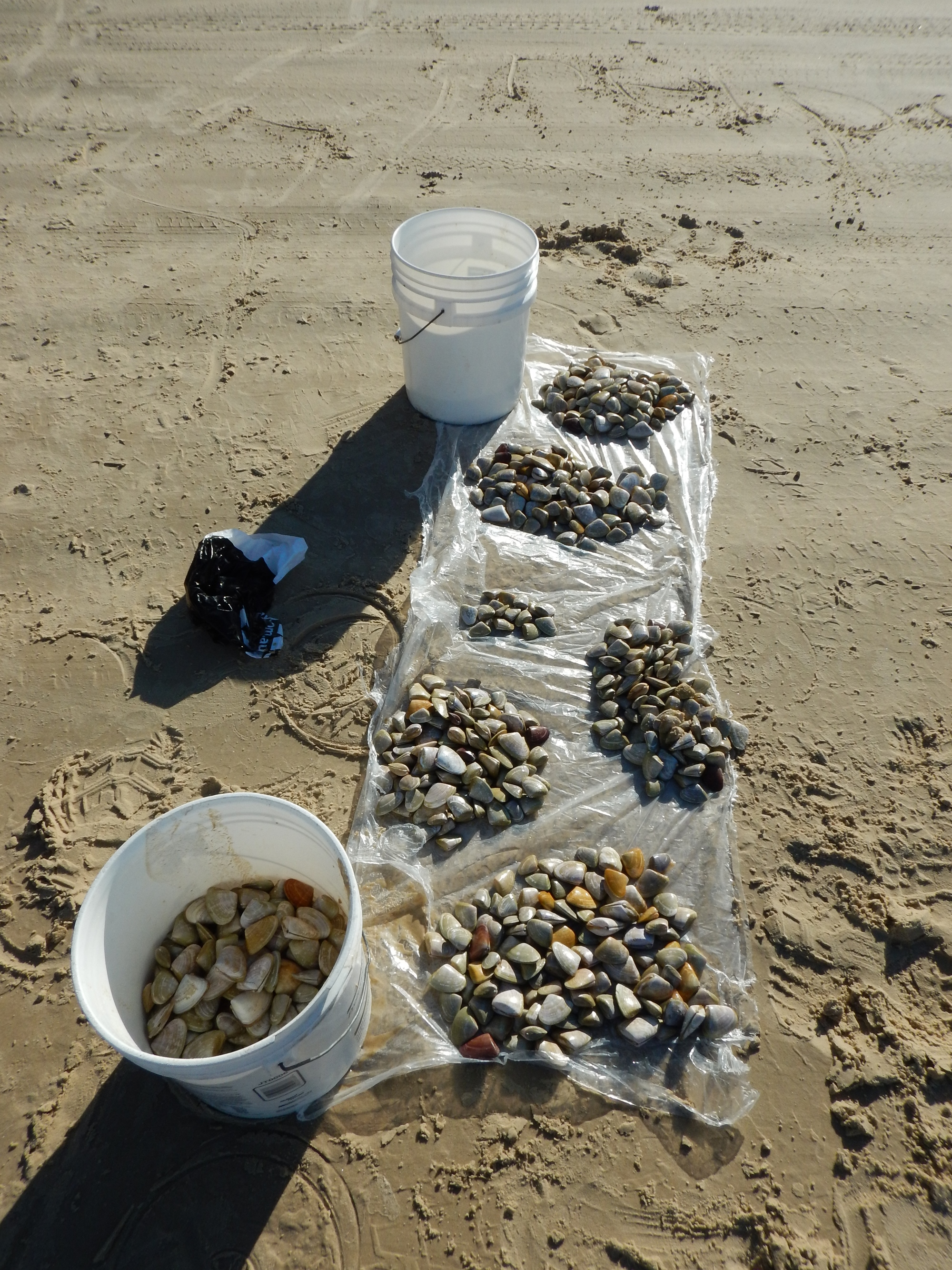 Excess pipis
