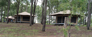 Safari Tents offer an affordable yet comfortable accommodation option.