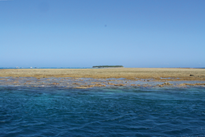 A view of Lady Musgrave Island.