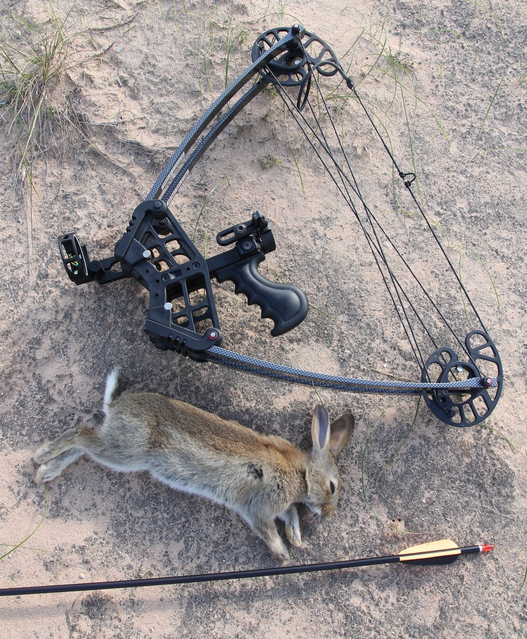 Accuracy is not lacking, allowing tiny targets such as rabbits to be hunted.