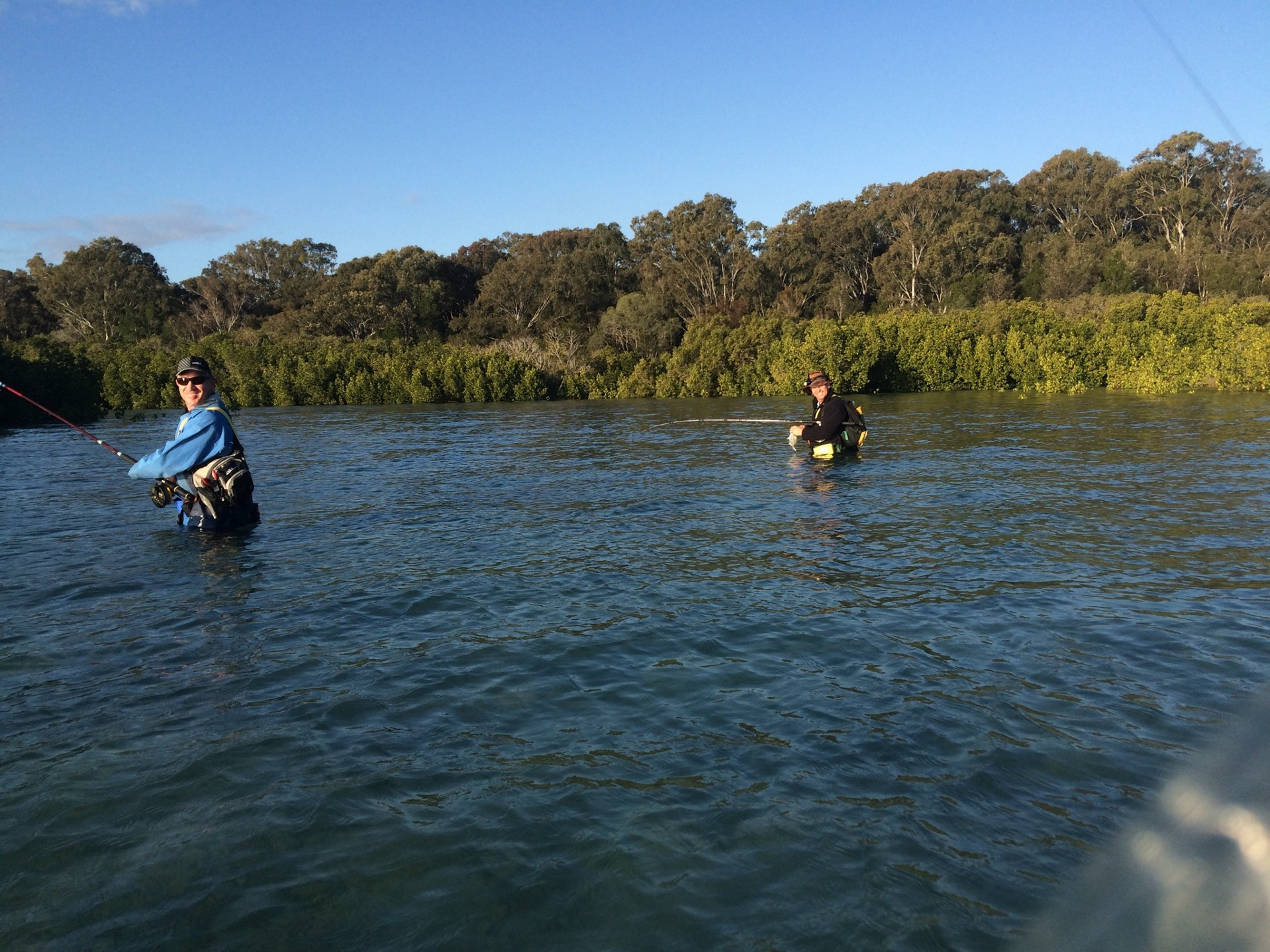 The whiting and bream turned it on around the mangroves at high tide.
