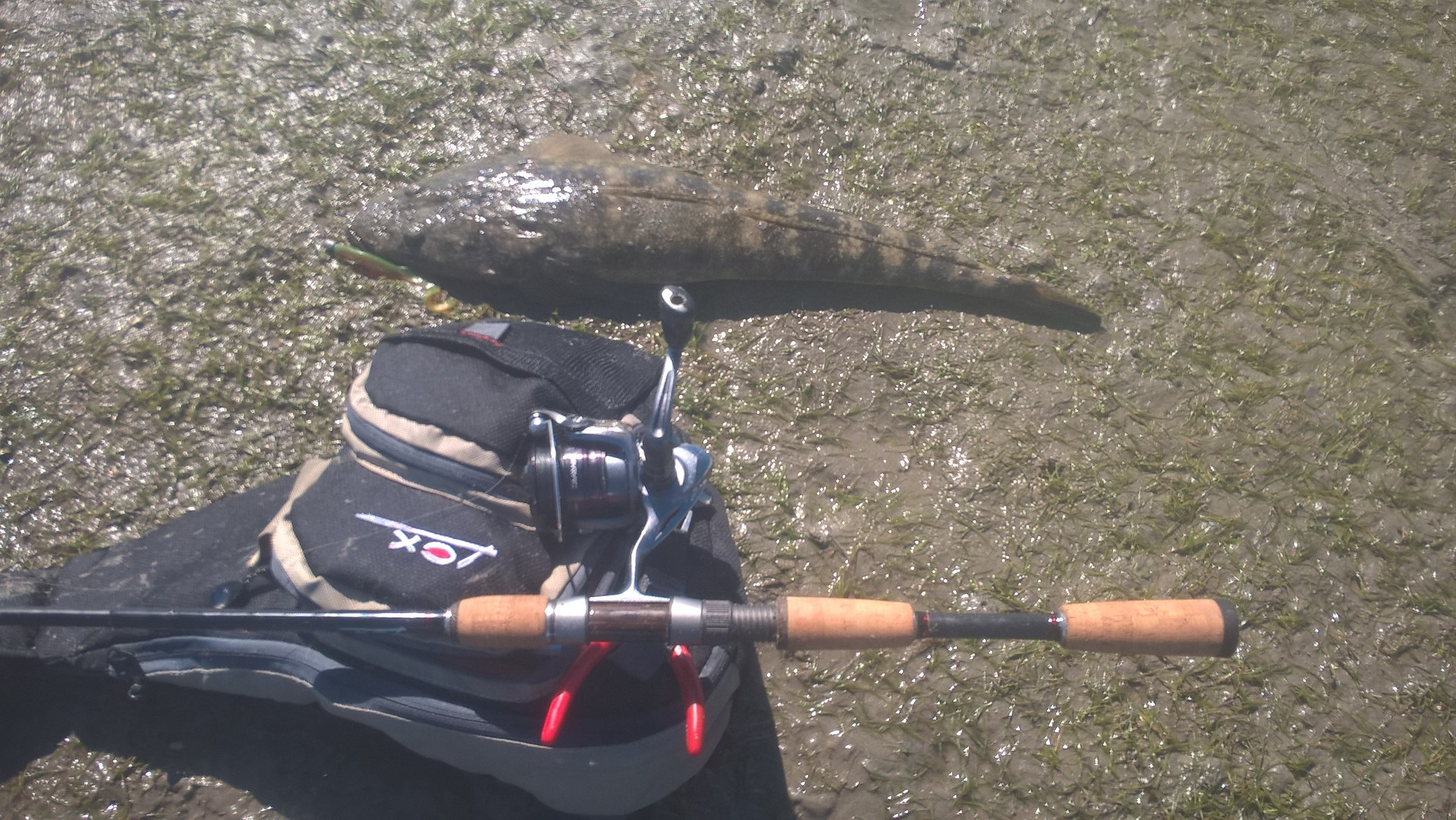 The author's flathead tackle of choice including the very handy Lox shoulder bag.