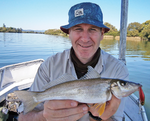 The fat little belly on this whiting is a sign the summer spawning period is starting.