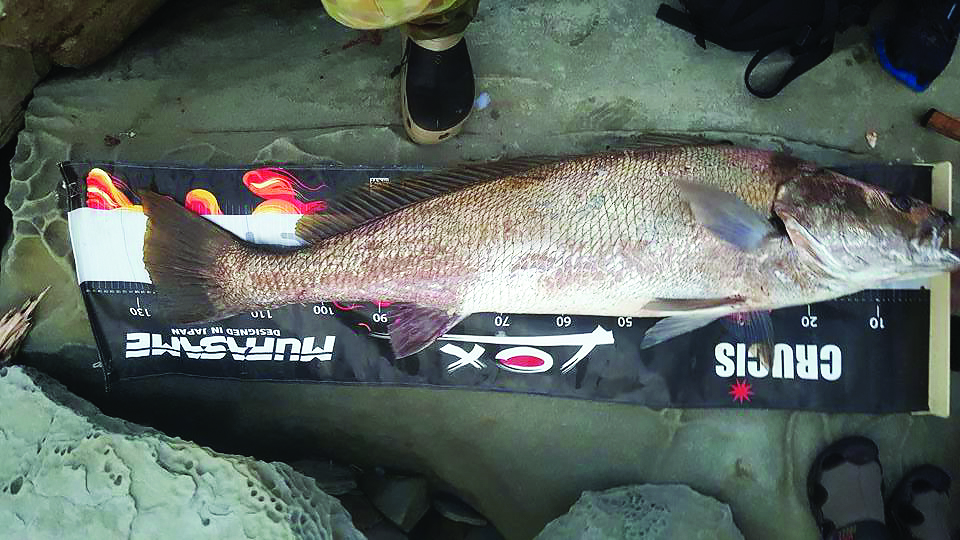 Nath's 128cm jewfish.