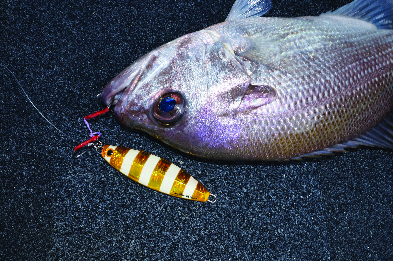 A slowly jigged metal with a shape similar to this Palms Slow Blatt will account for many pearl perch this winter.
