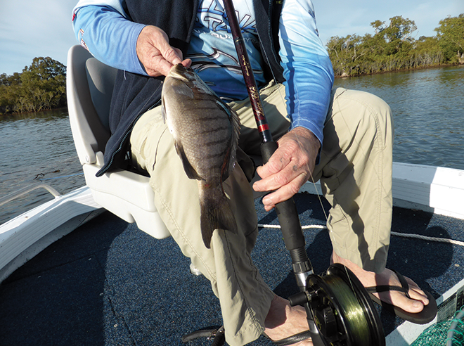 The author's new Wilson Live Fibre rod and Alvey 455B reel. This rod is extremely light.