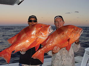 How good is the red fishing on the Fraser Coast!? A solid pair of reds was boated on dusk using a live slimy mackerel and a medium-sized tiger squid for bait.
