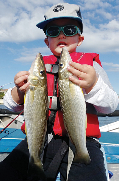 Young Angus with two quality whiting landed on a recent Nerang River trip with his dad.