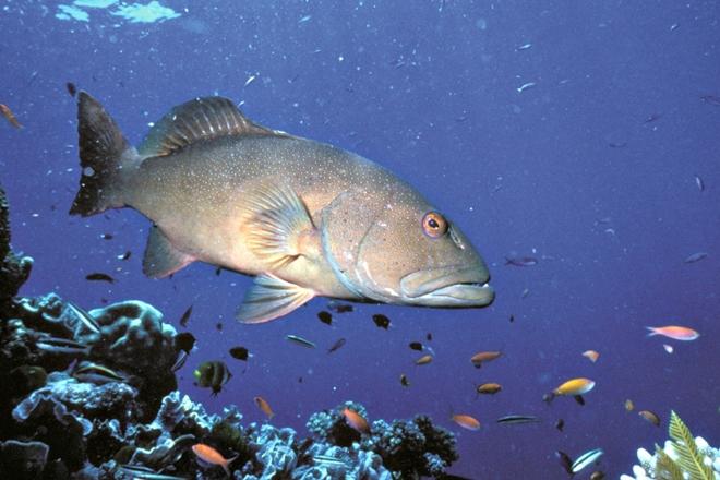 coral reef fin fish new moon closure