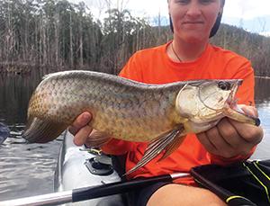 gold coast fishing 5