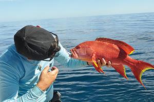 coral trout 2