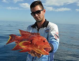 coral trout 5
