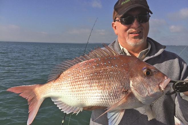 southern moreton bay snapper bay mackerel bait school