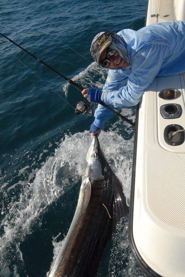weipa fishing sailfish