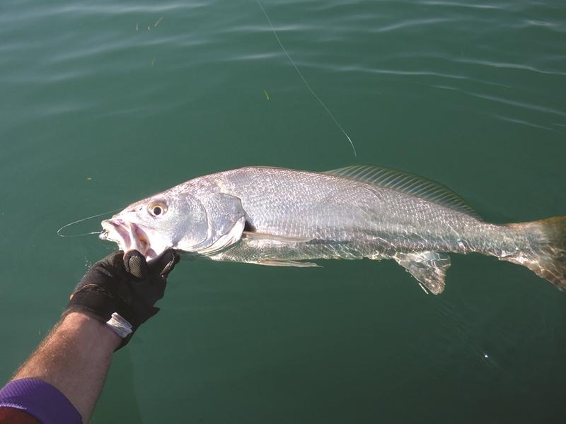 target jewfish moreton bay