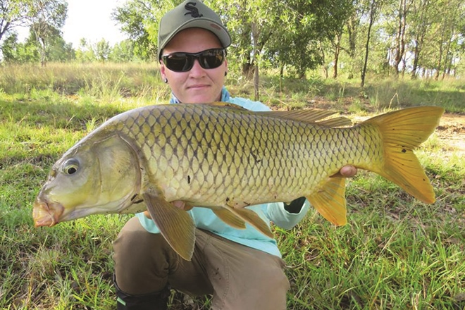 gold coast carp on fly