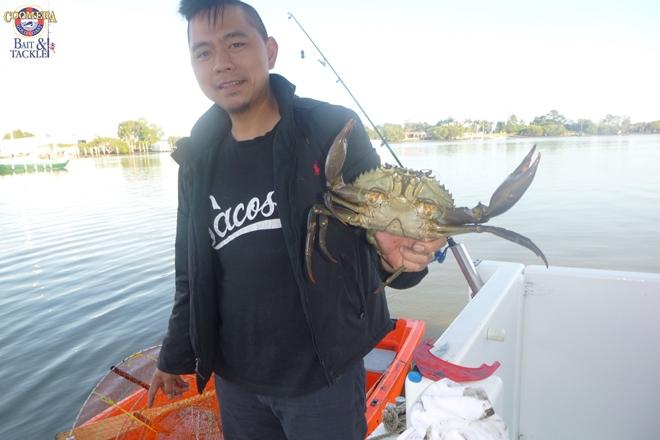 pelagic action gold coast