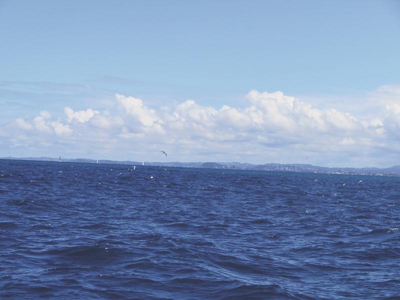 catching black marlin gold coast