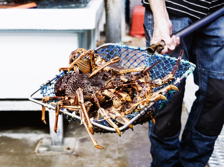 apollo bay seafood festival 2018