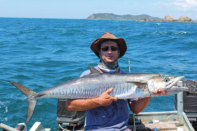 mackerel season brunswick heads