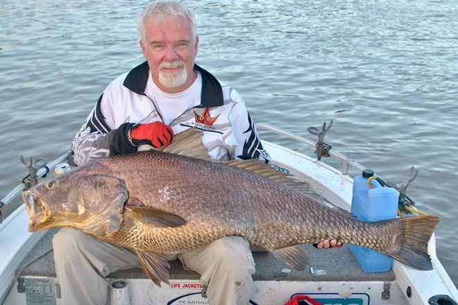 New rules to protect black jewfish and Moreton Bay molluscs